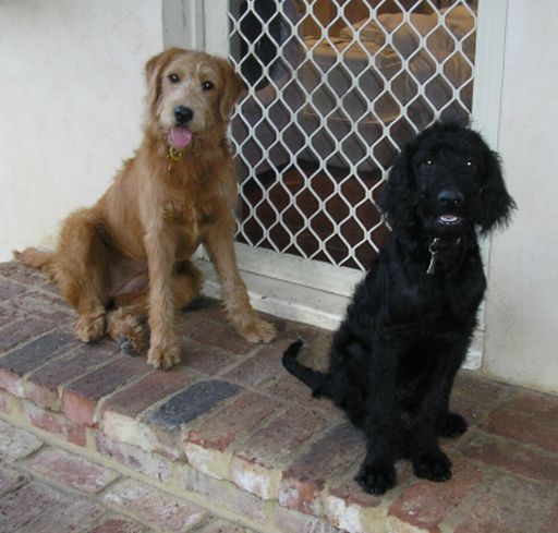 Chester_and_Ruby_back_door