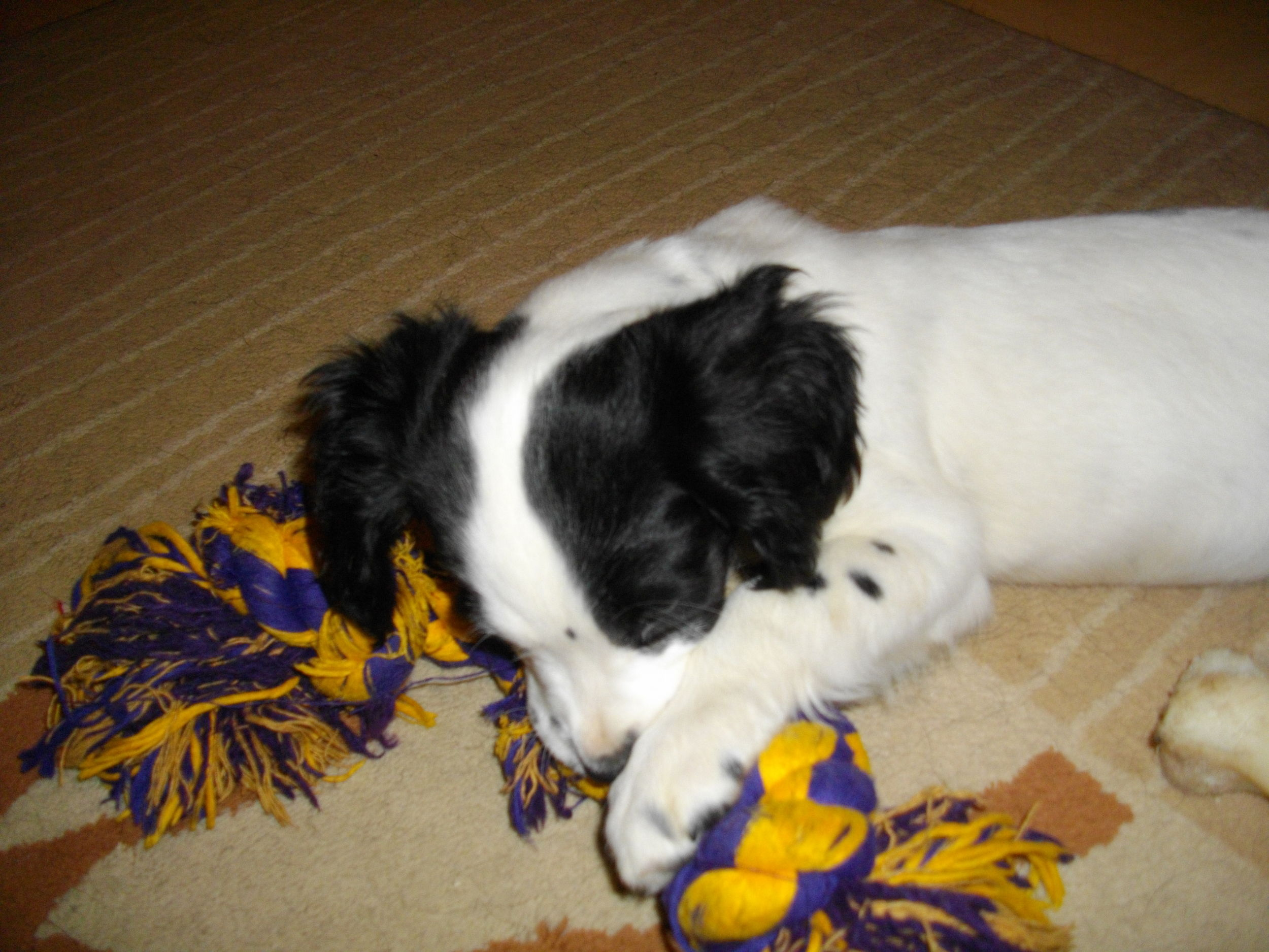 DOGS_049