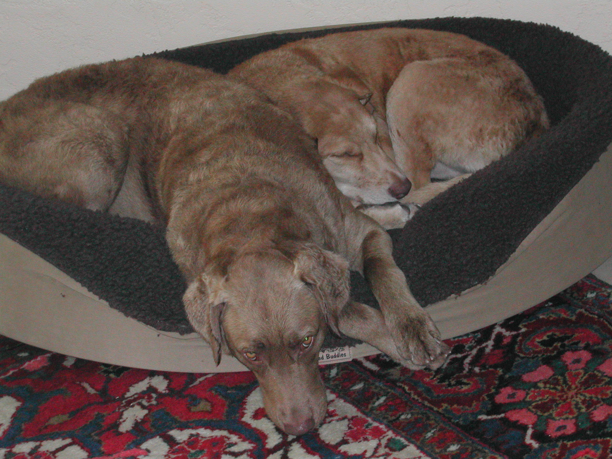 Dogs10-23-05_004
