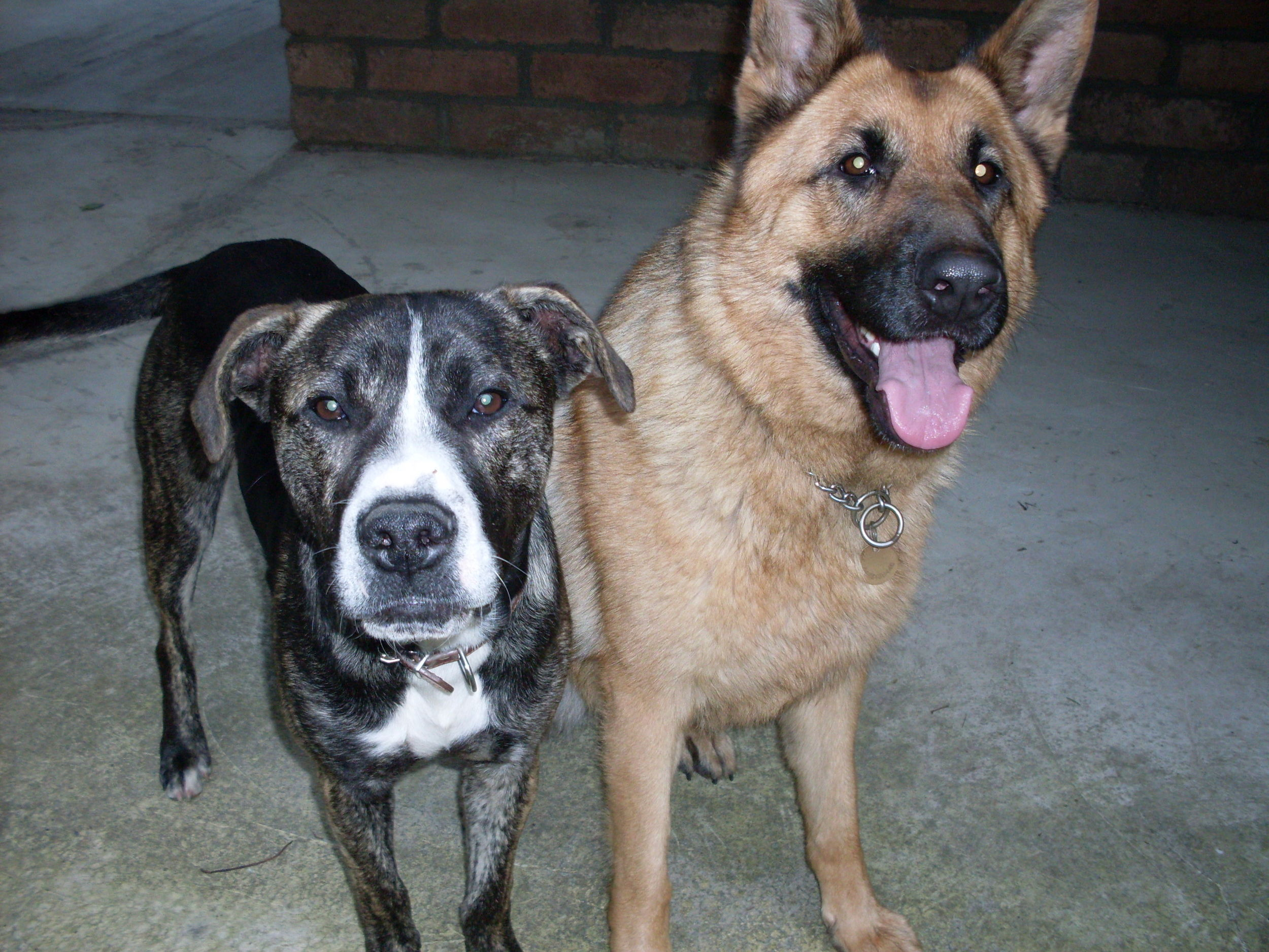 Dogs_016