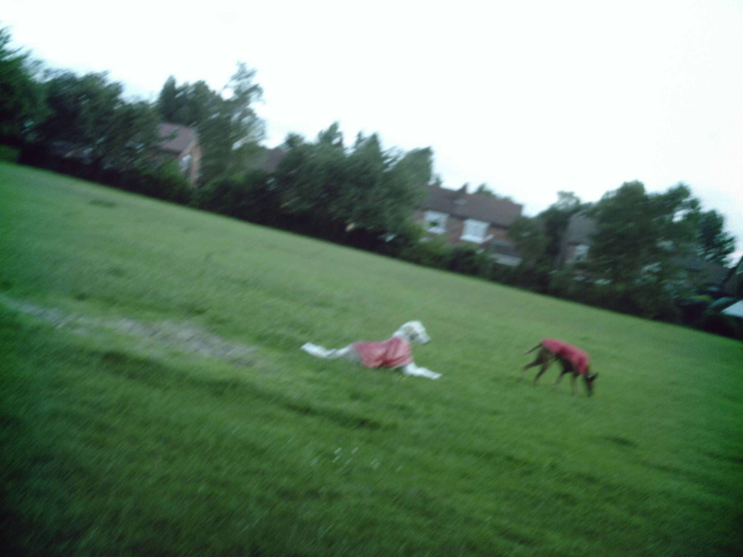 Pictures_July_2009_007
