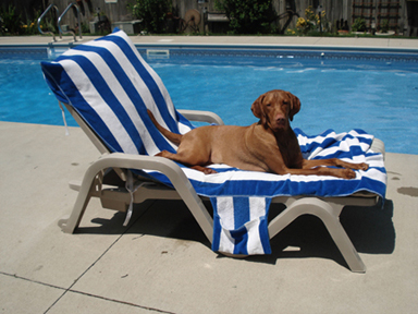 Schooner_on_chaise
