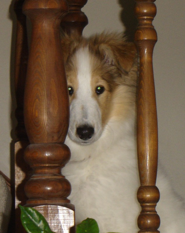 gracie_in_the_stairs_at_4_months_Standard_e-mail_view