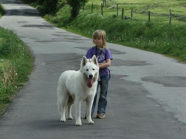 White Shepherd Berger Blanc Suisse General Information