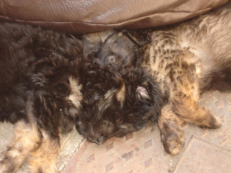 puppies_005a