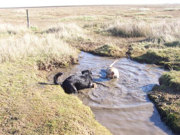 puppies_in_water_1