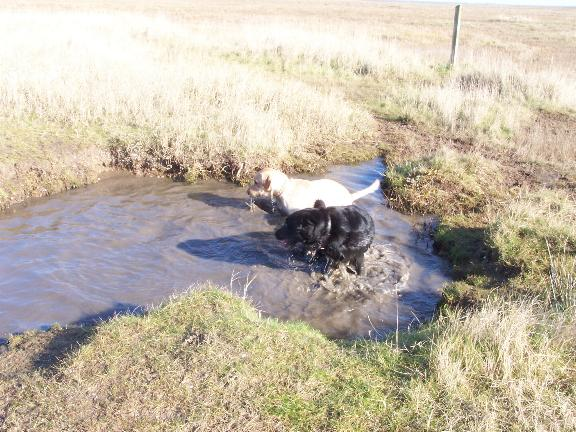 puppies_in_water_2