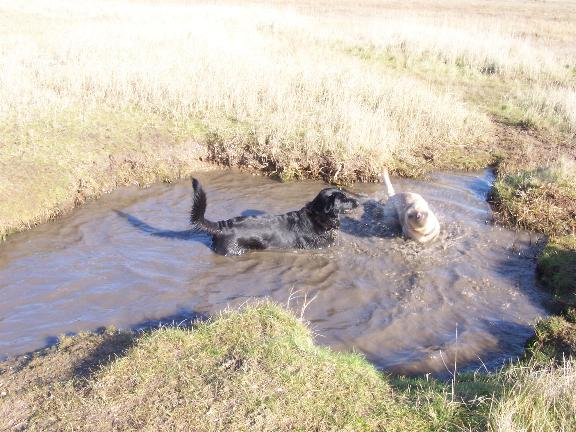 puppies_in_water_3