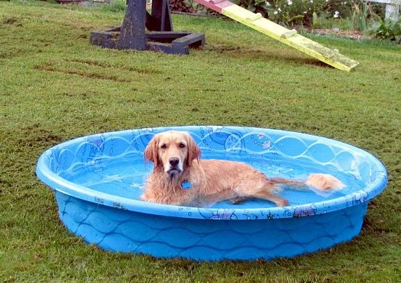Paddling Pool For Dogs Only Dog Forums And Community